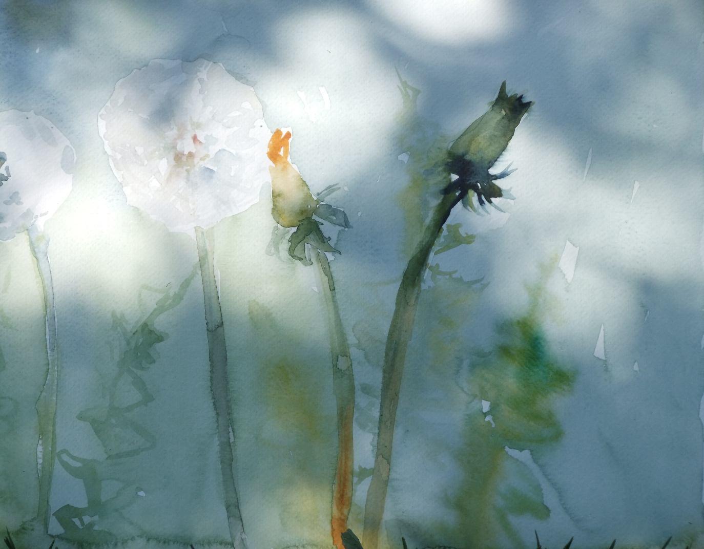 Voikukka, 2011 akvarelli